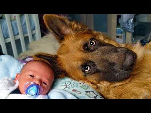 Dog Loves Baby | Funny Dog Babysitting And Protect Baby Moments