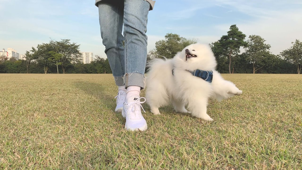 [Vlog] 어설프지만 뭐든지 열심히하는 모범생 강아지의 일상, 가을 산책 브이로그 🍂