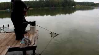 Ловля белого амура на Ольгинском озере