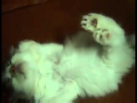 子猫のお昼寝? Kitty Rigor Mortis Nap - CollegeHumor Video