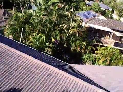 Using a cheap drone to film the impressive tree growing out of my house roof