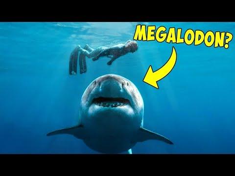 Das Auftauchen dieses Haies hat die ganze Welt erschüttert!