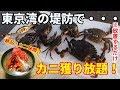 東京湾でカニ釣り 激うまイシガニが堤防から簡単に釣れる! カニ網で初挑戦。味噌汁が最高!