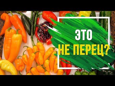 Виды перцев ��️ Почему болгарский перец не перец?