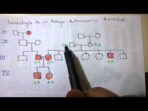 Información clave para elaborar documentos de tubería from YouTube · Duration:  1 hour 2 minutes 10 seconds