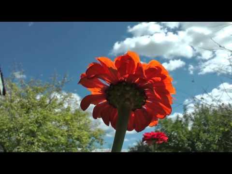 Рисуем карандашом и раскрашиваем гуашью бабочку и цветочек (цветок, лилию)