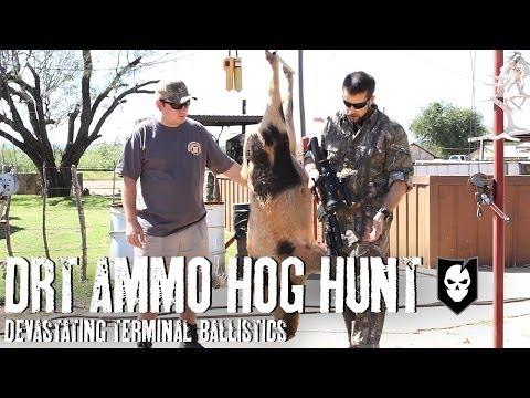 Hog Hunting With DRT Ammo And Devastating Terminal Ballistics
