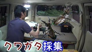エルグランドなんちゃってキャンピングカーで昆虫採集 車中泊・車中飯動...