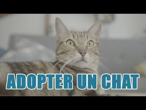 Quelles Sont Les Procédures Pour Adopter Un Chat ?