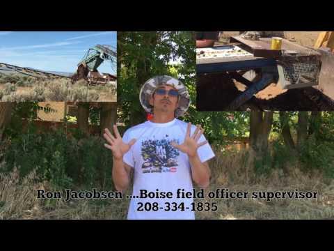 No More SunStone Belt Runs In Plush???? Sunstone Mines Need Your Help!