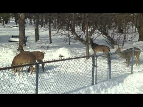 (Not) Deer Hunting In Cleveland