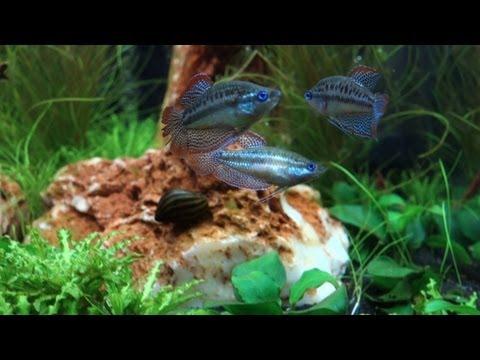 Sera marin cube 130 xxl doovi for Sera aquarium