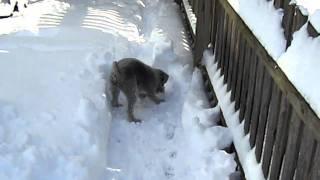 More Max The Bad Snow Dog MOV