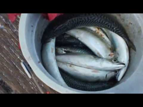 Fishing at its Best Imperial Beach Pier Must See !!!  #1