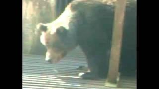 Bear Irina(, 2012-03-17T20:11:12.000Z)