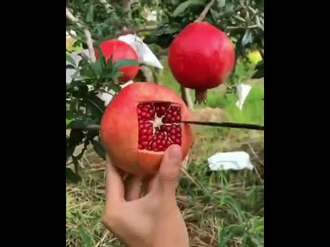 How to effectively slice a pomegranate | Beautiful' pomegranate-cutting video goes viral.