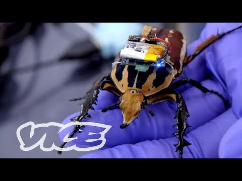 Singapore's Remote-Controlled Cyborg Insects
