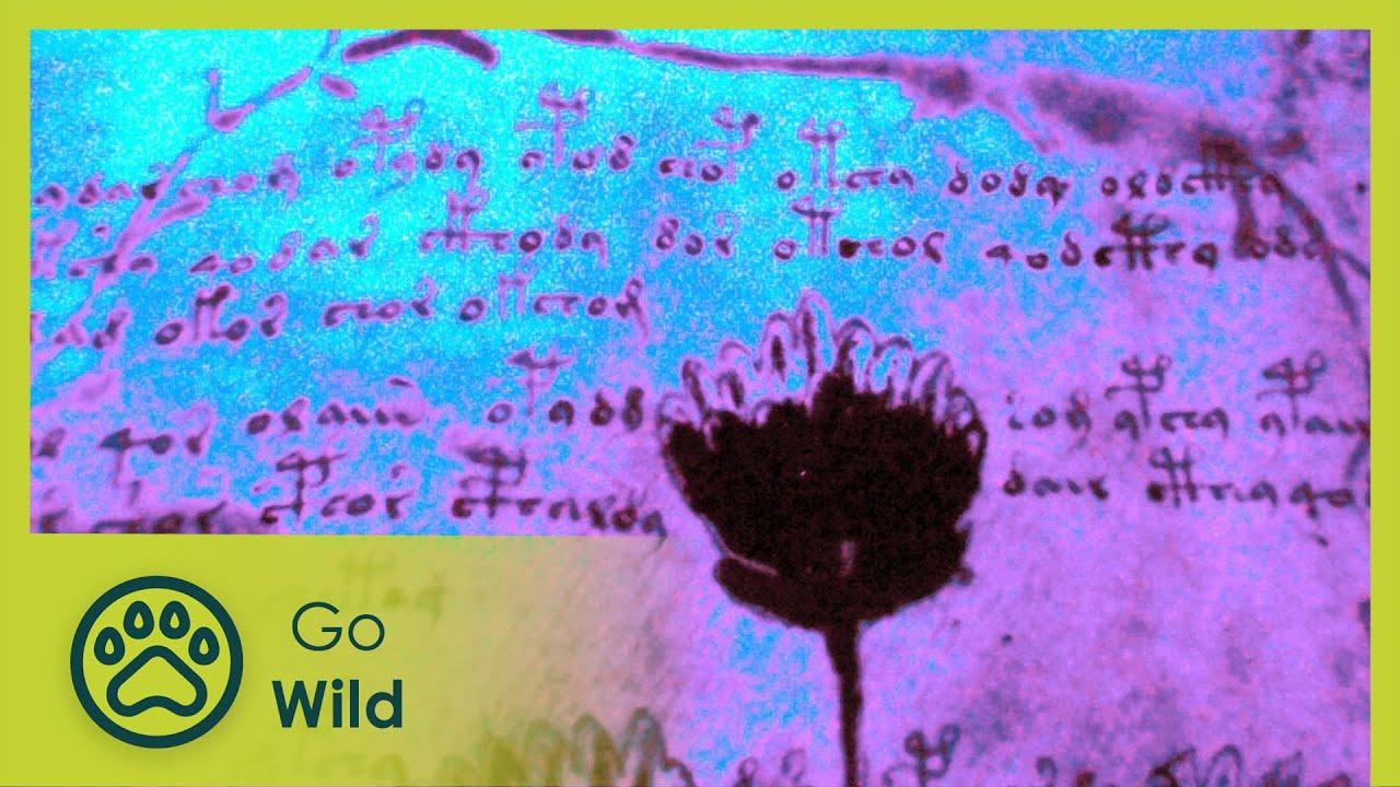 Download PDF: Voynich Manuscript & Codex Serahinianus PDF