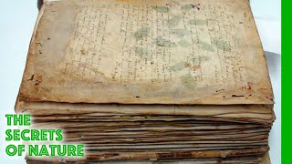 the-voynich-code-the-worlds-most-mysterious-manuscript-the-secrets-of-nature