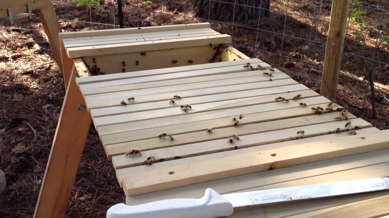 Action plan: Working our Africanized Top Bar Honey Bee ...