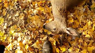 Осенняя охота на косулю