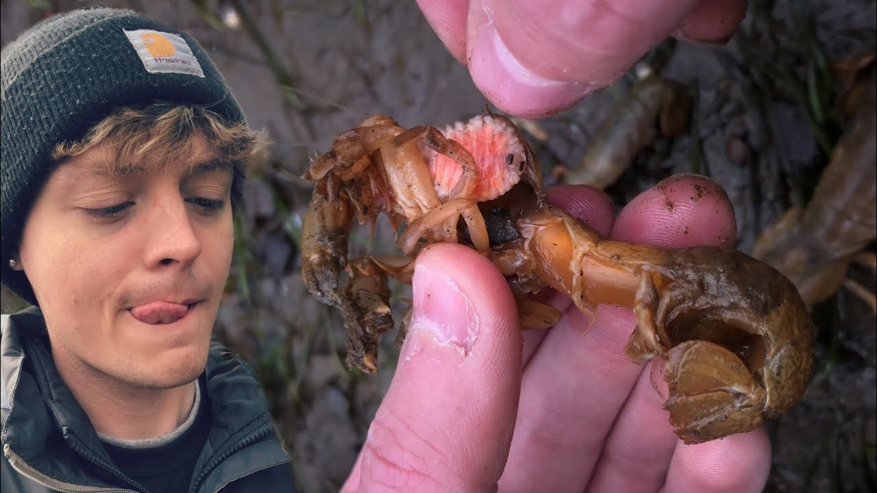 MOST SATISFYING Pulsating Parasite Removal from Shrimp Family #shorts