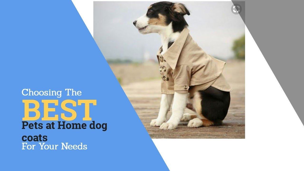 Economical Dog Coats For Small Dogs In Nw Usa Top 10 Dogs Cold