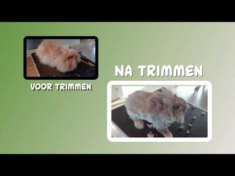 Promotie video Trimsalon en Dierenoppas Bunnycat