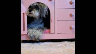 i-ken家具で製作したユーリ専用のドッグハウスです。 興味のある方はhtt...