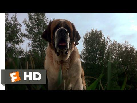 Cujo-18-Movie-CLIP-A-Bat-Bites-Cujo-1983-HD