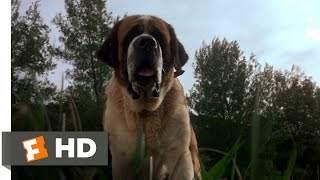 Cujo (1/8) Movie CLIP - A Bat Bites Cujo (1983) HD