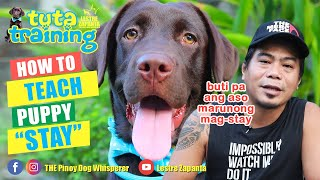 "How to teach your puppy the ""STAY"" command na hindi mo na kailangan ng dog trainer."
