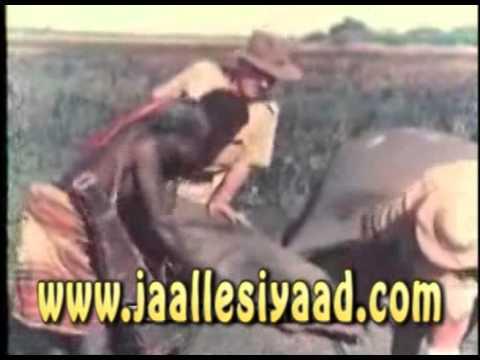 Somalia's Wild-Life - 1953