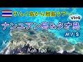 🇹🇭ナンユアン島&タオ島でスノーケリング│🇹🇭タイ散歩Vlog│HISタイランド