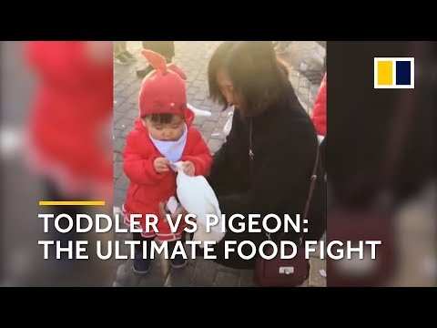 Toddler vs pigeon: Chinese kid steals food from pigeon's beak