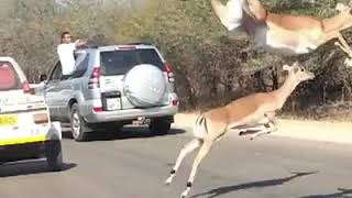 Animals Hit By Cars #2 - Animals On The Road Compilation