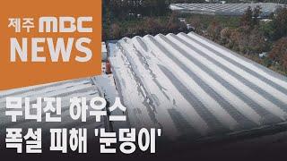 무너진 시설하우스…한파·폭설 피해 '눈덩이'2021 1…