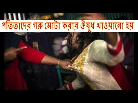 Download Madam of Brothel II পতিতাদের গরু মোটা করার ঔষুধ খাওয়ানো হয়  || Prostitute in Bangladesh