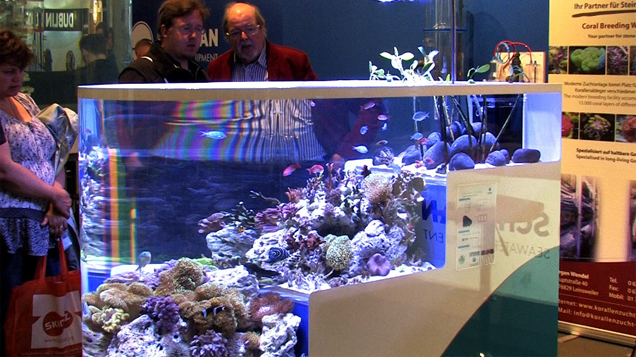 Fish from Mauritius in an acrylic tank of Schuran Seawater Equipment - YouTube