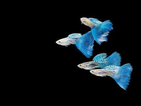 Top Fish For A 10 Gallon Fish Tank