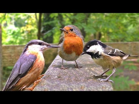 Sounds for Cats - Birds Chirping at The Forest Gate