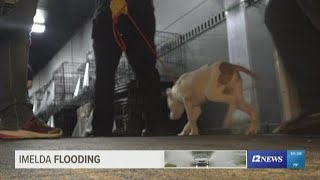 Beaumont Animal Care, Humane Society team up to transport animals making room for pets lost in flood