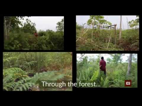 Leaked Records Reveal Offshore's Role In Forest Destruction