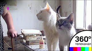 В Москве в трехкомнатной квартире живут несколько десятков кошек и котов