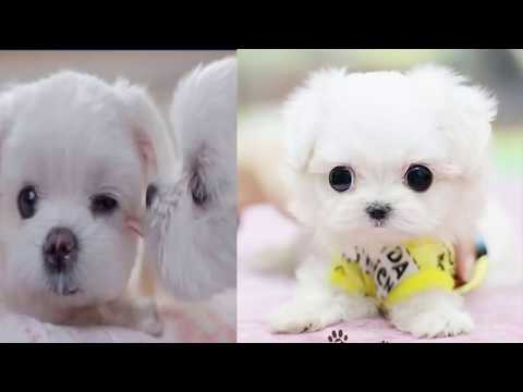 top 10 cutest dog breeds absolutely girl like most this cute and funny puppies