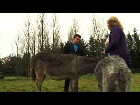 Animal Communication Documentary - Faye Rodgers