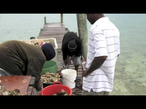 """Campaign Snapshot: """"Size Matters"""" Song - Abaco Island Bahamas campaign"""