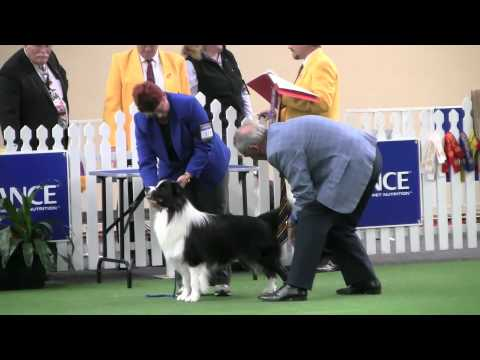 Part 1. Border Collie Breed Judging Adelaide Royal Show 2012