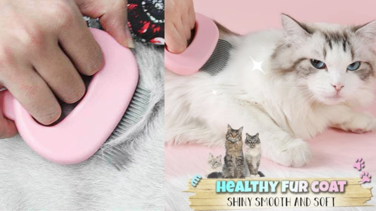 Pet Hair Removal Massaging Shell Comb Review 2020