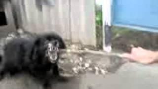 Дима образцов издевается над собаками